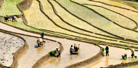 Rice terrace fields in Lao Cai, North Vietnam
